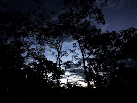The Amazon at dusk, when the symphony began.
